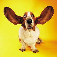 wordstock-dog